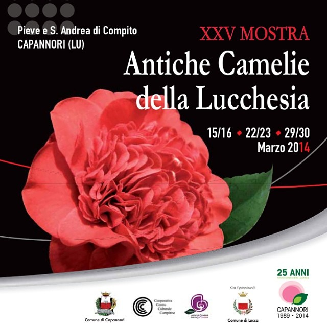 XXV mostra antiche camelie lucchesia 2014 - vadoevedo